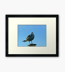 Seagull Perched Framed Print