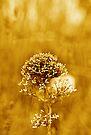 Golden moment by David Carton