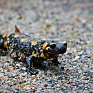 Salamander by Andrei Stirb