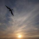 """""""I am sailing"""" - Frigate Bird with yellow Sun - Fregata con Sol amarillo by PtoVallartaMex"""