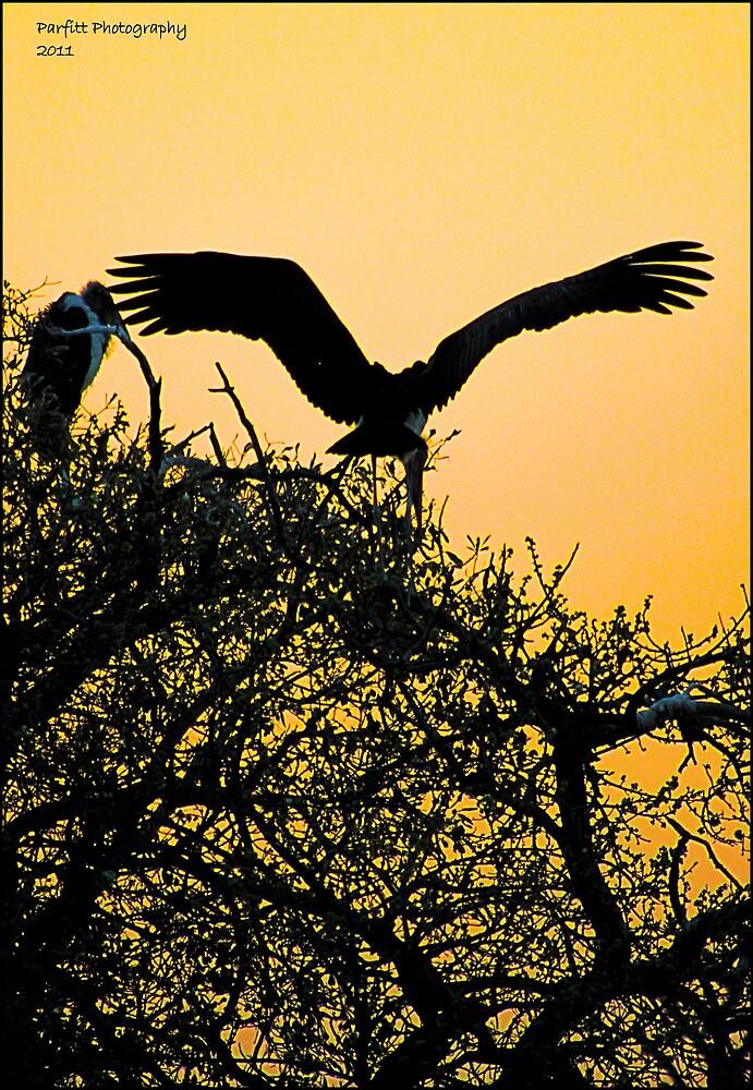 stork sunset! by Greg Parfitt