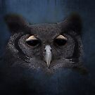 The night owl by almaalice