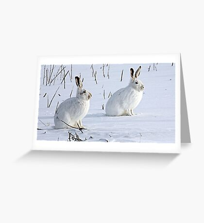 Hare There! North American Snowshoe Hare Greeting Card