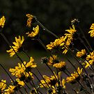 Reaching For The Sun by Michael  Moss