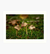 Miniature fungi Art Print
