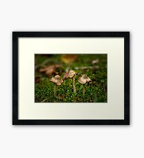 Miniature fungi Framed Print