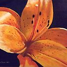 Tigerlily by Donny Clark