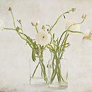 White on White by Henrietta Hassinen