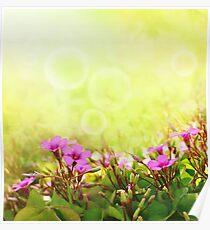 Spring Time Morning Poster