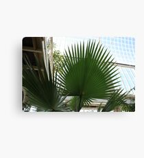 In the Palmhouse Canvas Print