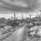 Desert Path by Tracy Riddell