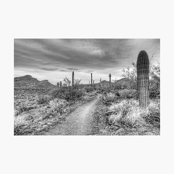 Desert Path Photographic Print