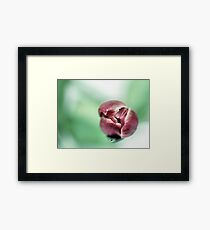 Separated... Framed Print