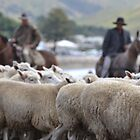 Herding sheep at Castlepoint. by Barbara Caffell