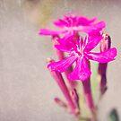 In Bloom by XxJasonMichaelx