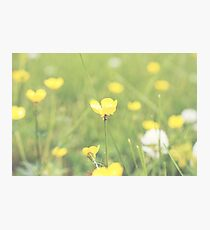 Flowers in the Field  Photographic Print