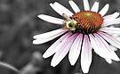 Mono Color Bee by Jessica Liatys