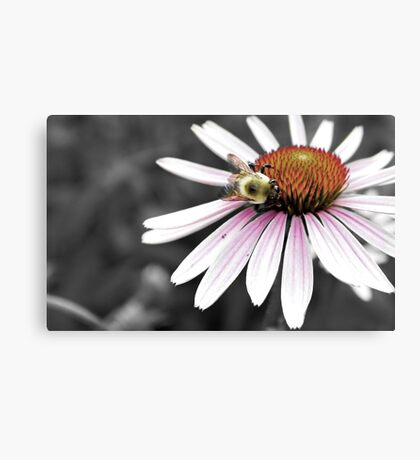 Mono Color Bee Canvas Print