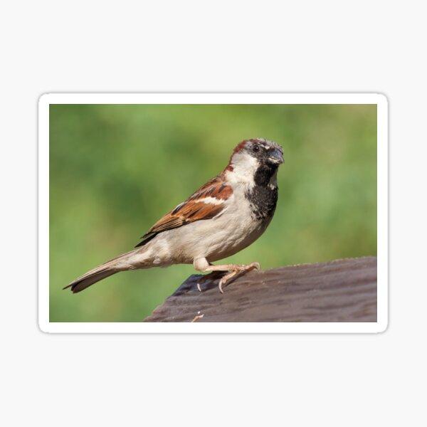 Jack the Sparrow Sticker