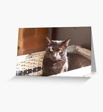 Bludger Greeting Card