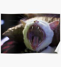 Cat Roar Poster