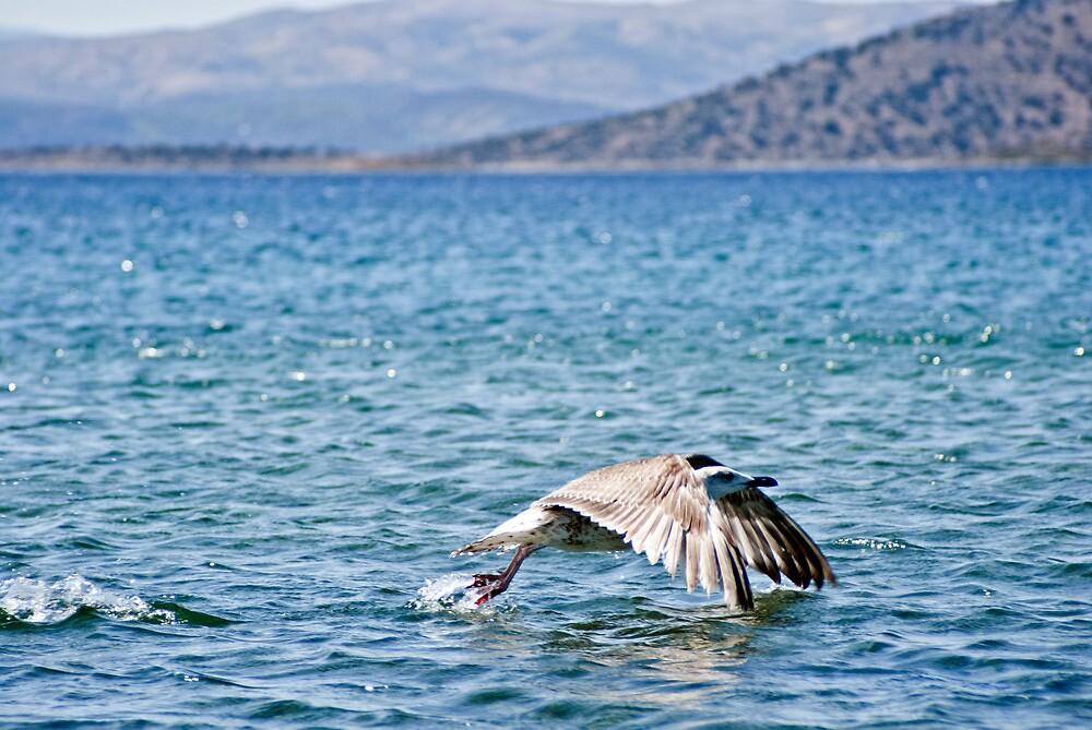 SeaBird by Clockworkmary