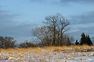Minnesota Meadow in March by Robin Clifton