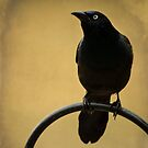 Common Grackle Portrait by Renee Blake