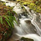 Eula Creek by Chappy