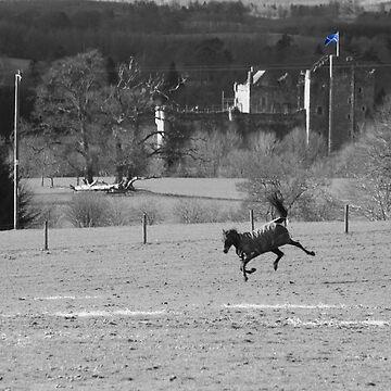 Wild Horse by fincath