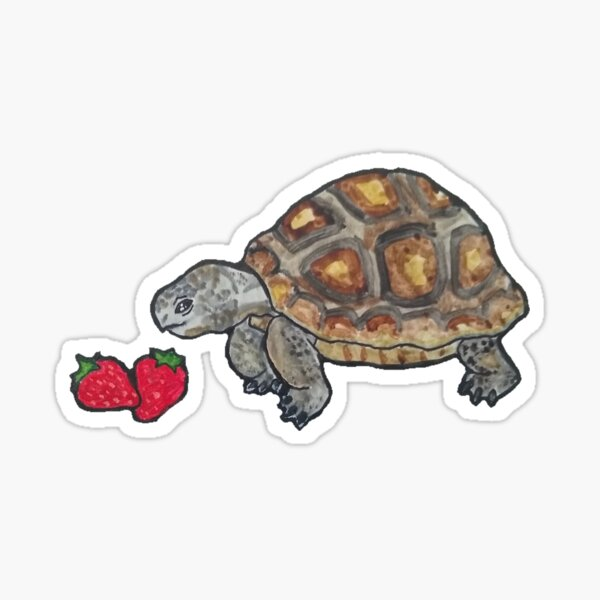 Happy Tortoise Sticker