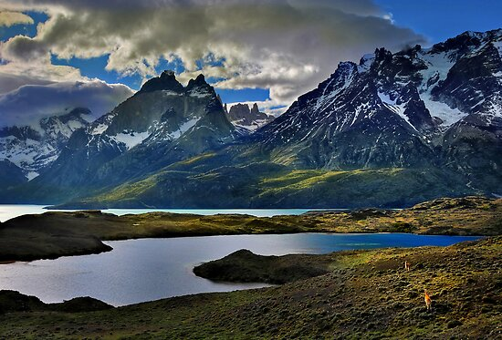 Guanacos and the Massif by Peter Hammer