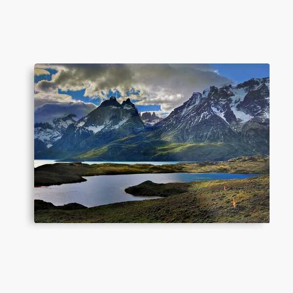Guanacos and the Massif Metal Print