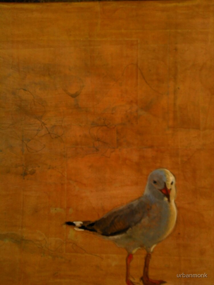 Silver Gull by urbanmonk