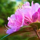 Olga Mezitt Rhododendron by Anita Pollak