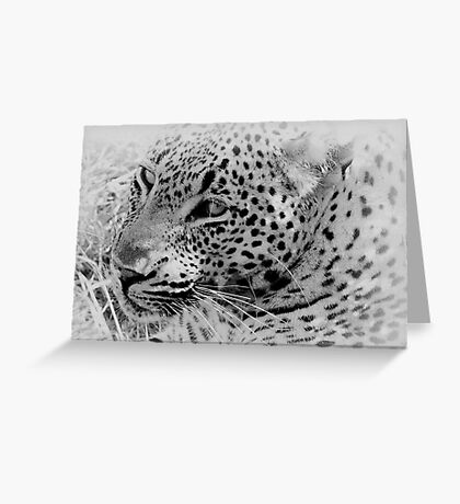 Rest Before The Hunt Greeting Card