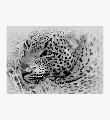 Rest Before The Hunt Photographic Print