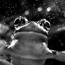Frog by Melissa Gray