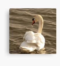 The Swan With The Runny Nose Canvas Print