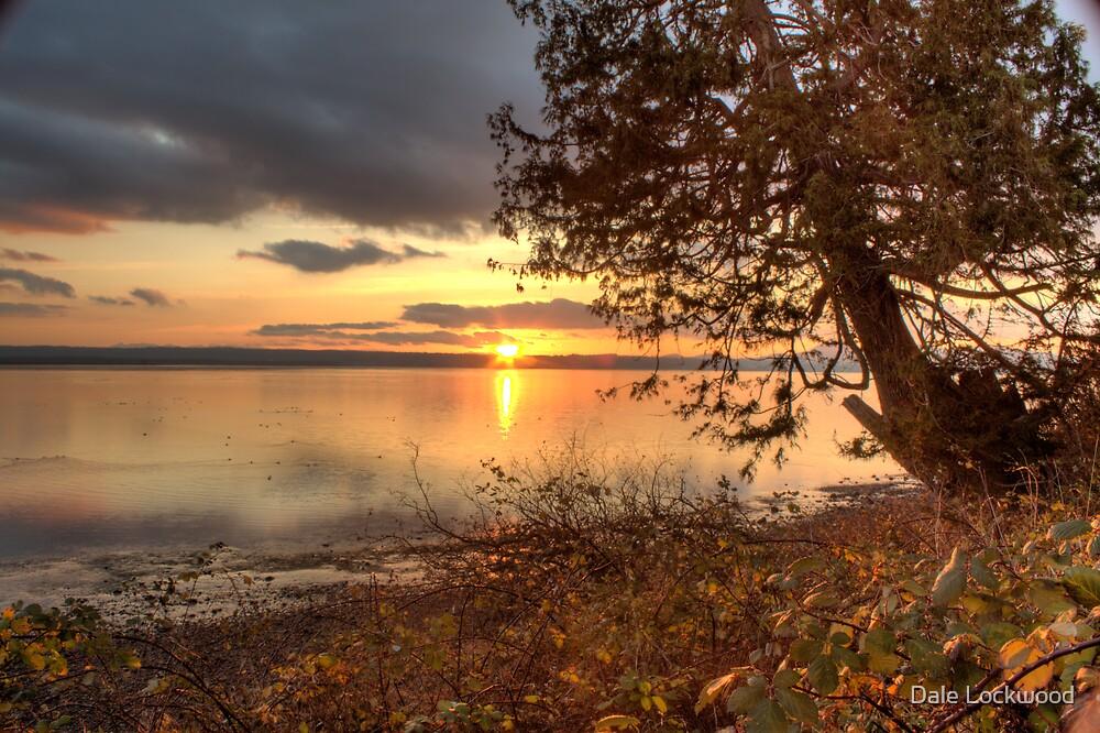 Sundown Upon a Leaning Cedar by Dale Lockwood
