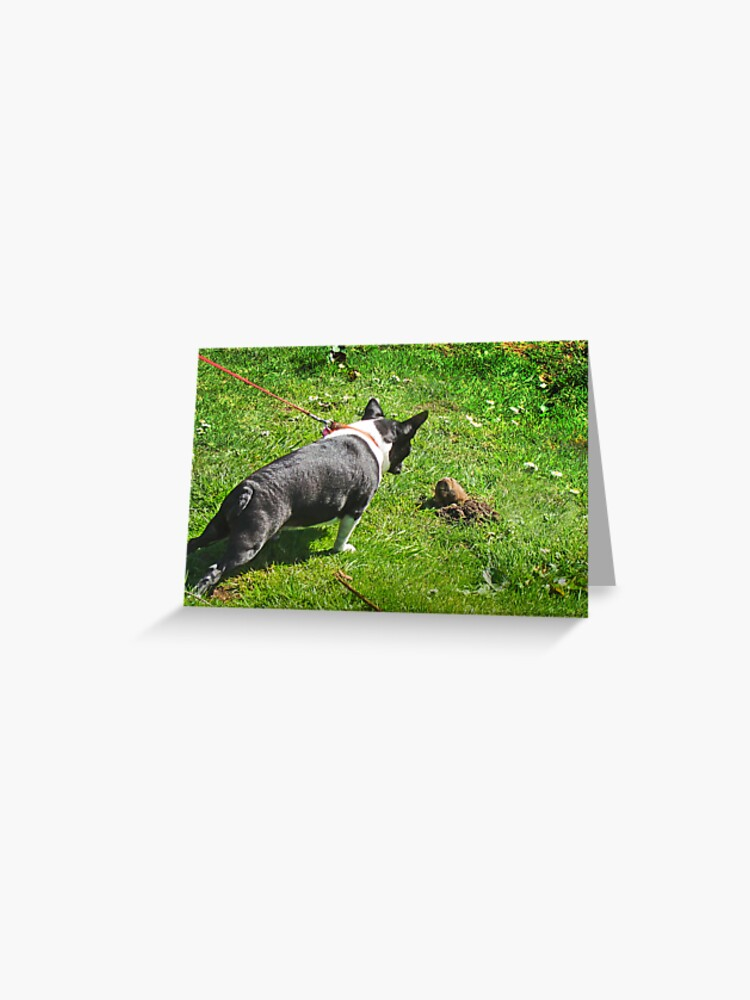 French Bulldog and the Gopher   Greeting Card
