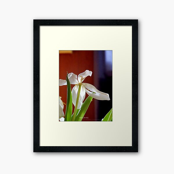 tulip {levels} Framed Art Print