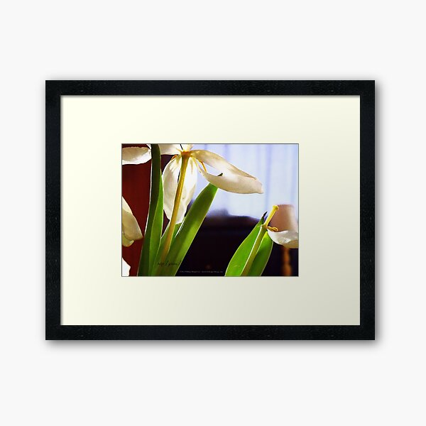tulip [grain] Framed Art Print