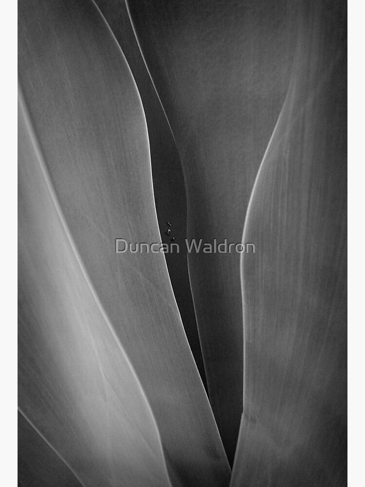 Agave + 3 raindrops by DuncanW