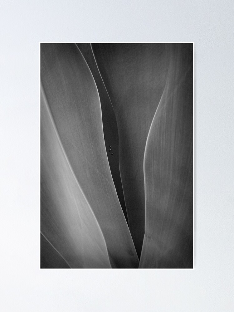 Alternate view of Agave + 3 raindrops Poster