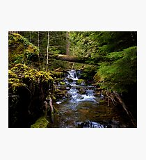 The Headwaters Of Quartzville Creek Photographic Print