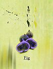 Fig by Elaine  Manley