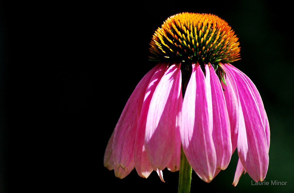 Single Flower by Laurie Minor