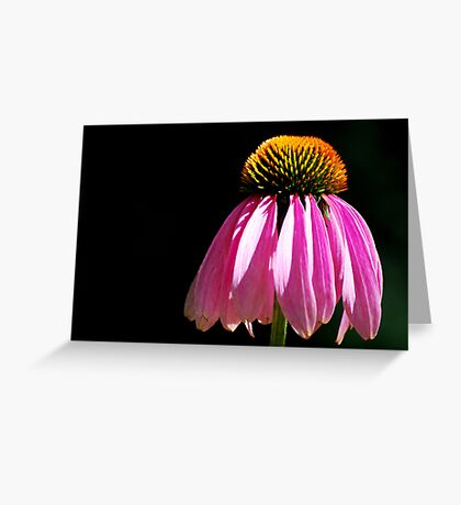 Single Flower Greeting Card