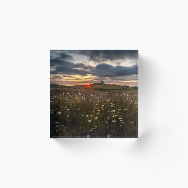 photograph fields of daisies at sunset in the Magdalen Islands Acrylic Block